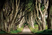 Obraz na szkle TREES III 120x80